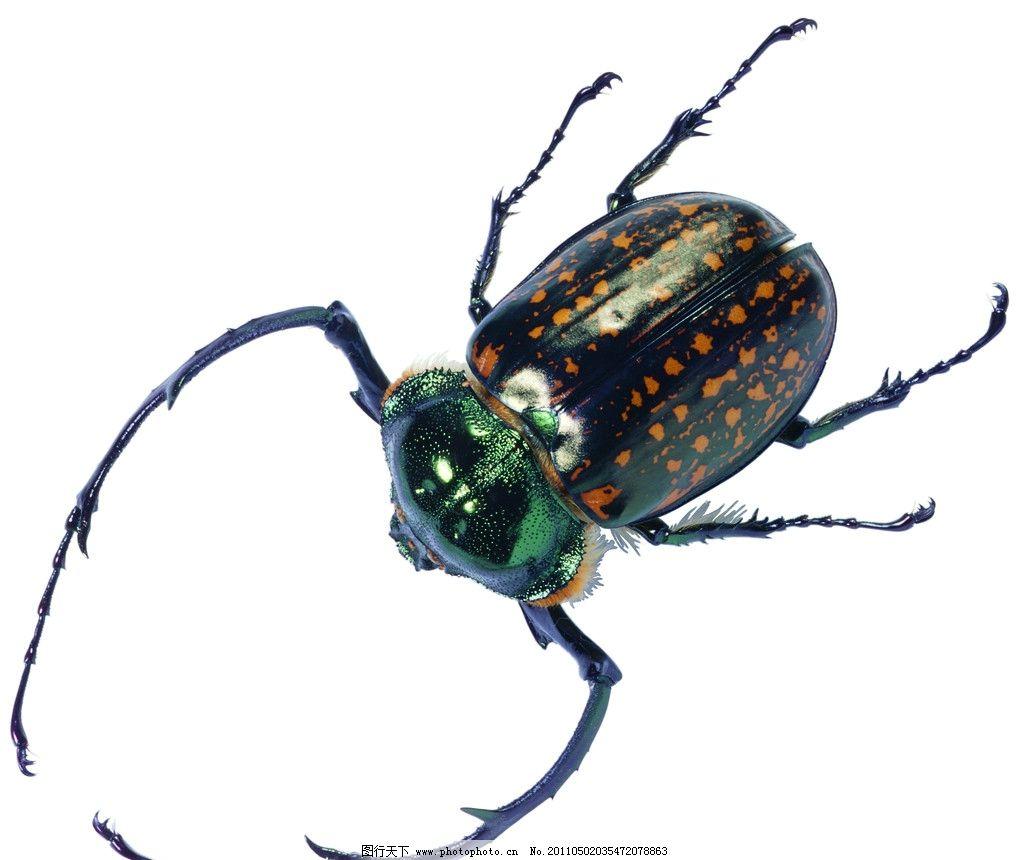 天牛 昆虫 动物 爬虫 自然图片