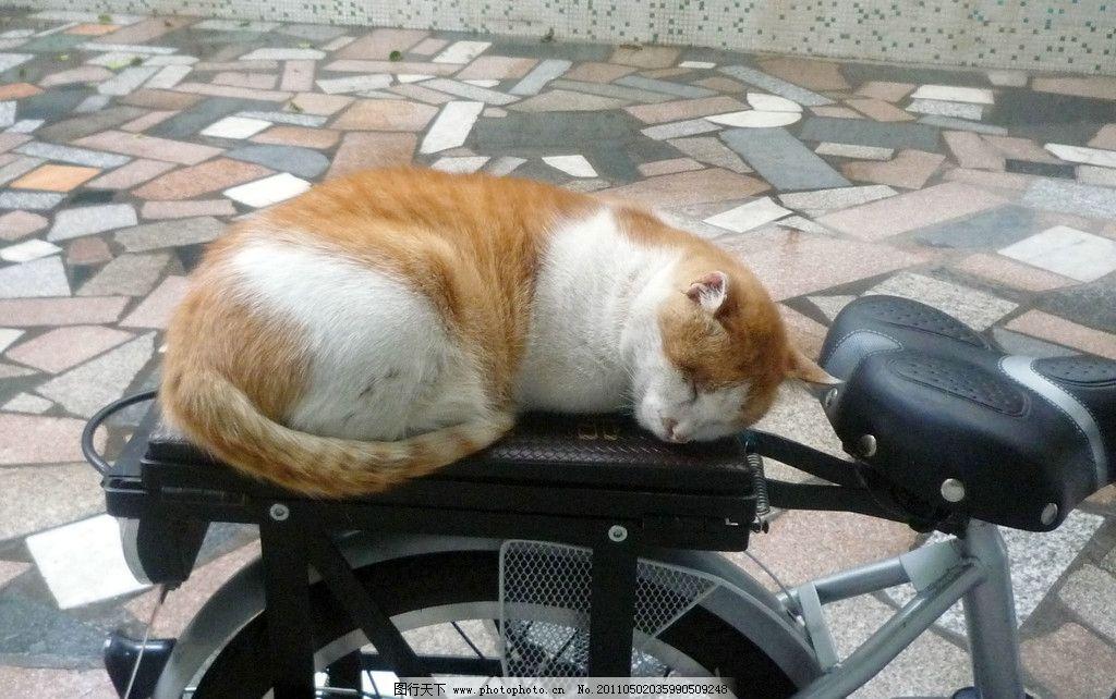 熟睡的猫 乖巧 安静 猫咪 可爱 漂亮 摄影