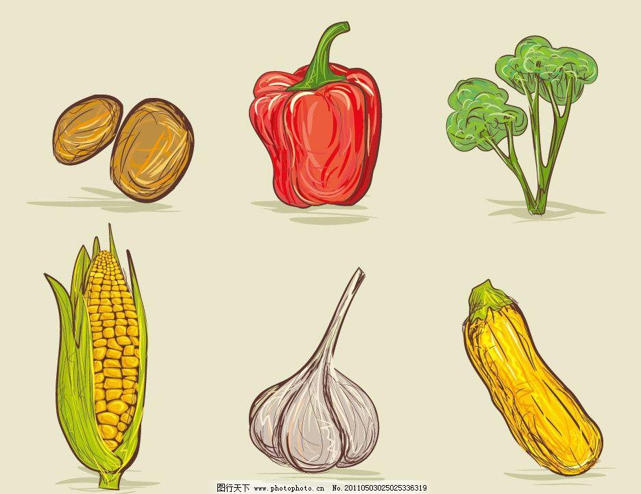 手绘蔬菜 土豆 青椒 玉米 大蒜 西葫芦 蔬菜 营养 健康 生物世界 矢量