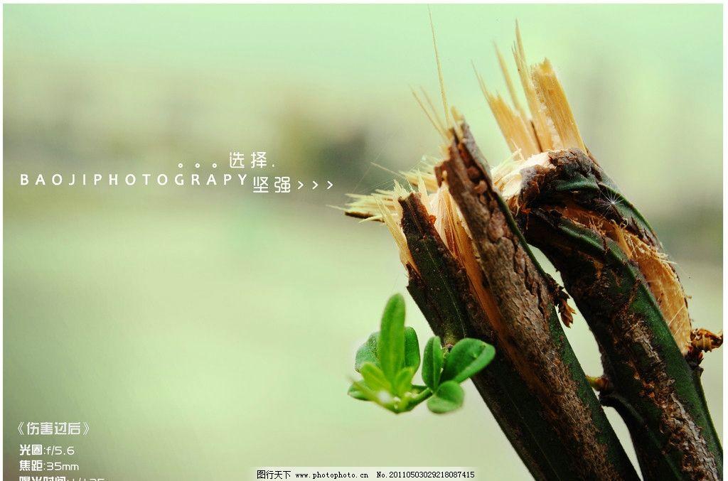 折断的树枝图片