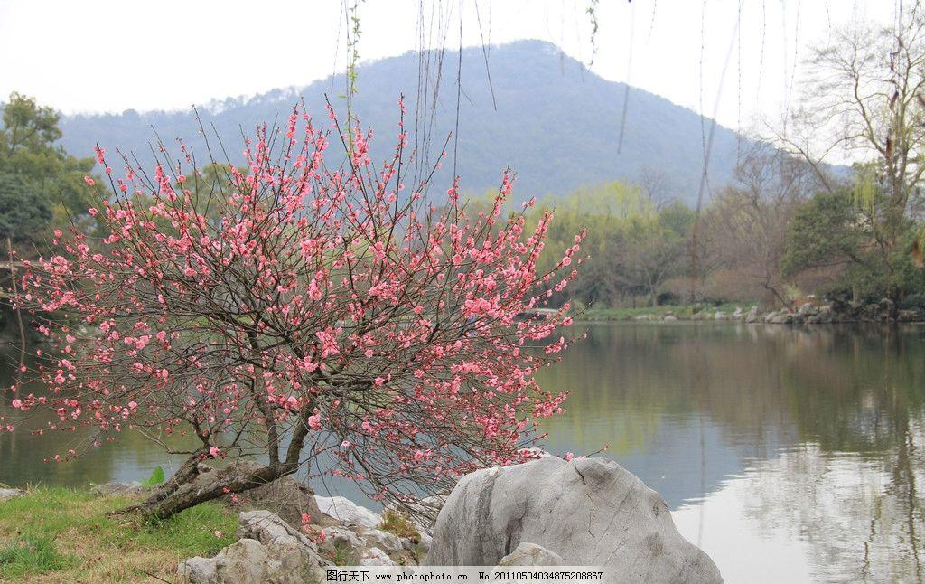 梅花梅树花卉花草山水自然风景摄影自然景观