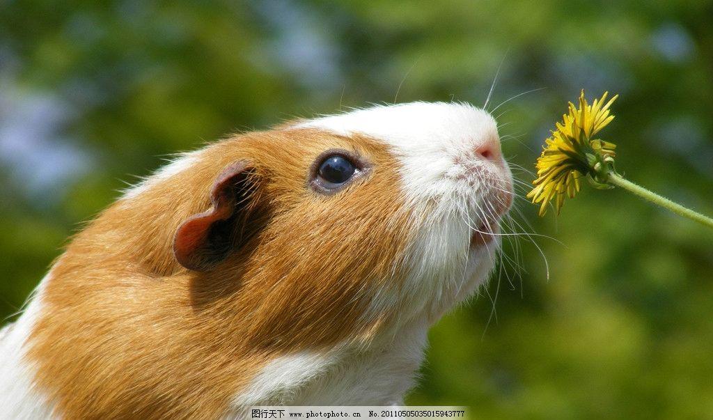 仓鼠 松鼠 鼠类 野生动物 闻花 生物世界 摄影