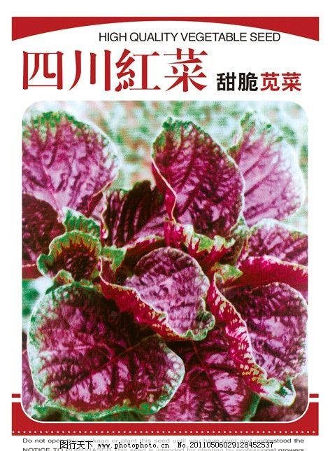 红菜 菜包装 农业包装 菜海报 汗菜 广告设计模板 源文件