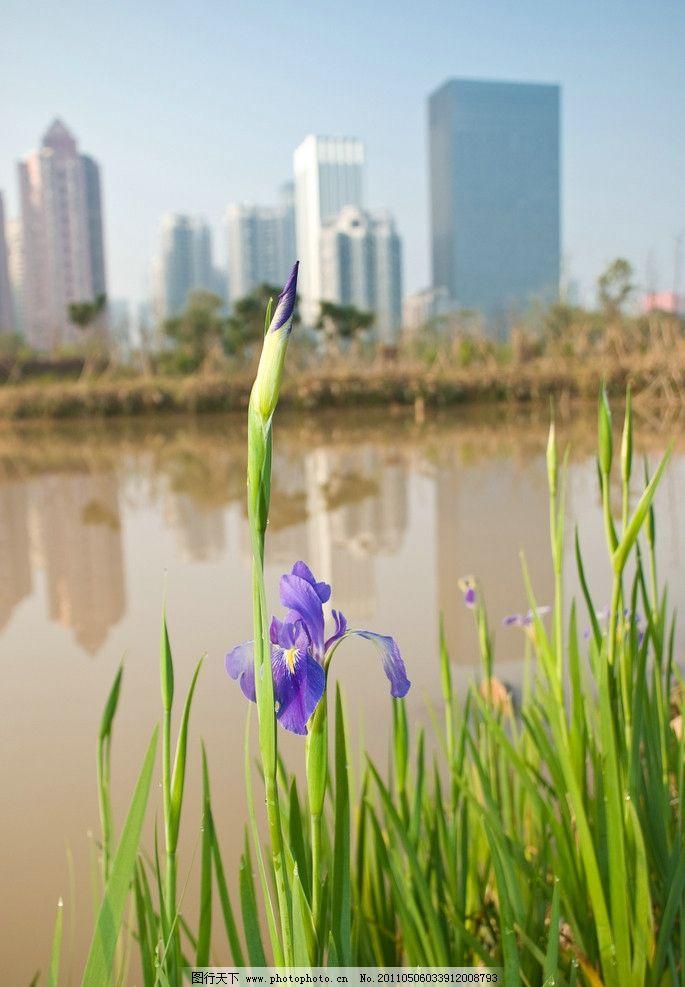 湖泊边的花朵