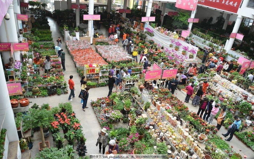 枯桃花卉一角 花卉 青岛 枯桃 花卉市场 一角 鲜花 种类多 交易 赏花