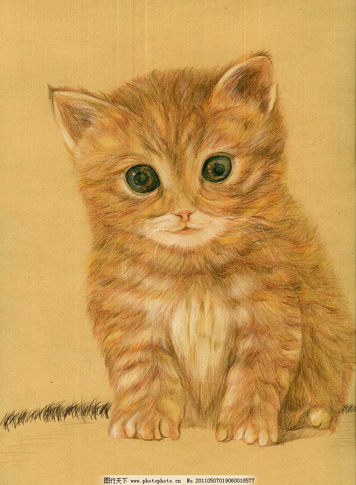猫咪手绘图片