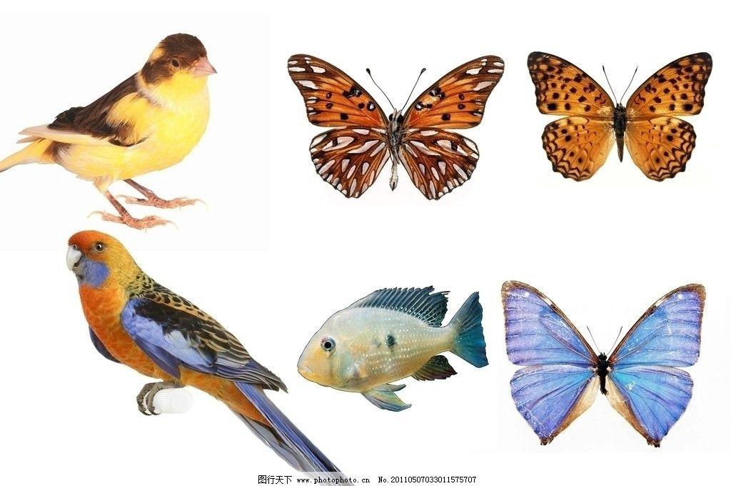 动物 动物世界 鱼 热带鱼 观赏鱼 蝴蝶 花蝴蝶 黄鹂鸟 鹦鹉 小鸟 源文
