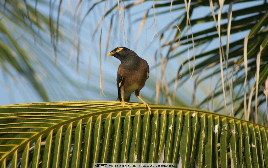 快乐的小鸟 树枝 热带树 树叶 动物 摄影