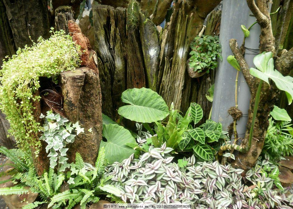 植物造景 植物 造景 爬藤植物 枯木 枕木 石头 菇婆芋 鸟巢葳 山苏
