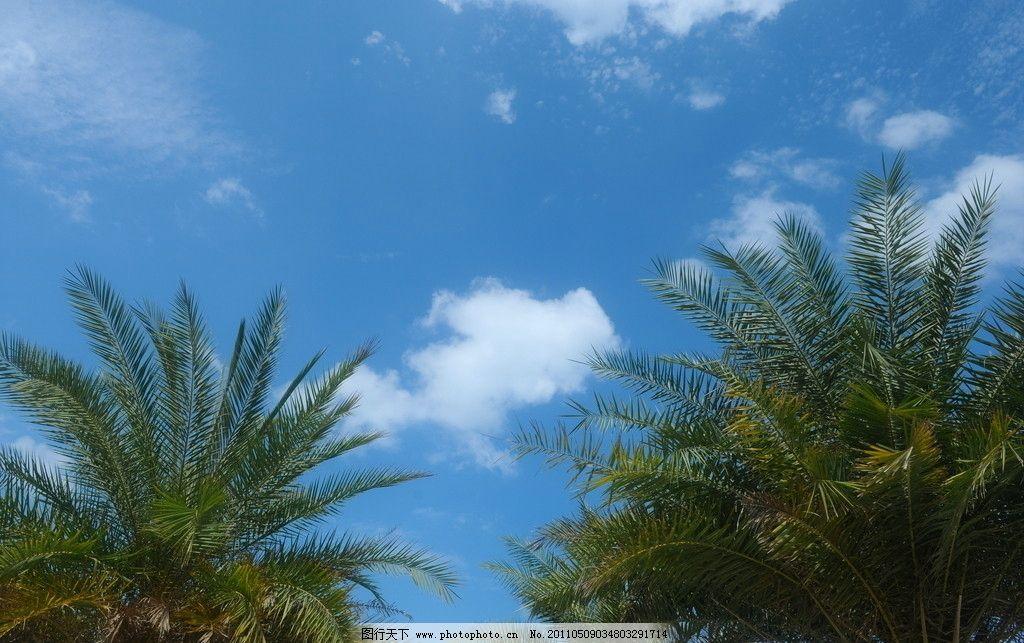 蓝天白云树木 蓝天白云
