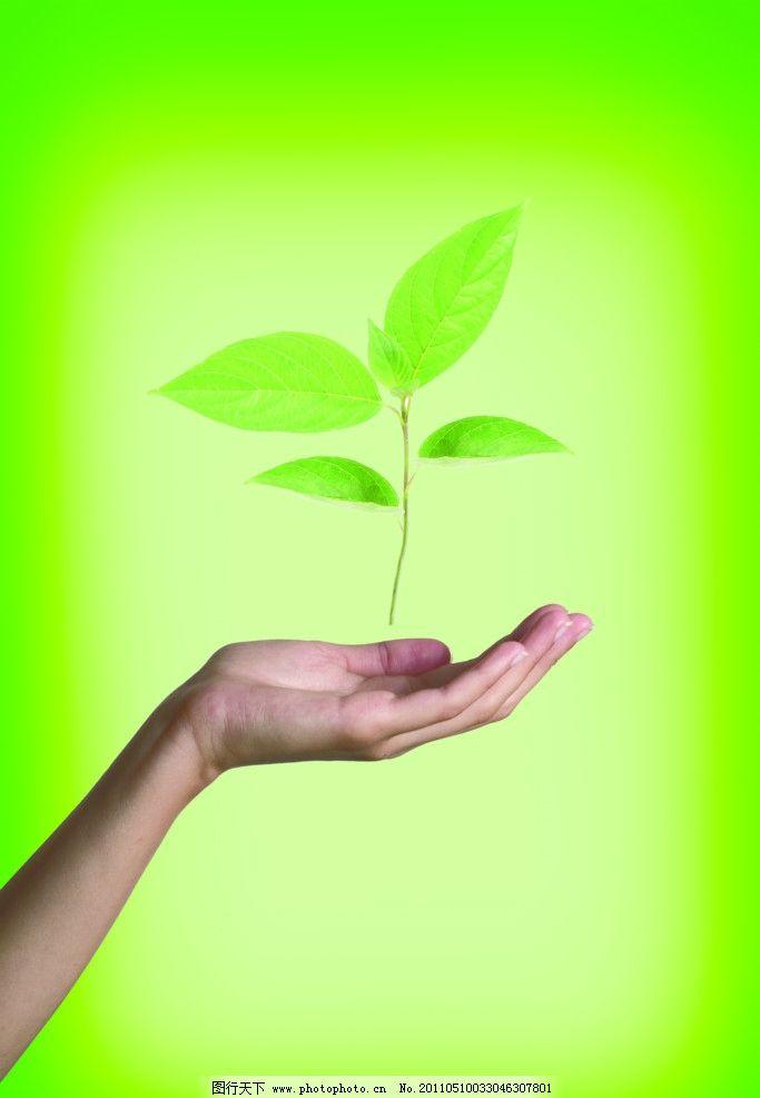 希望 教育 嫩芽 树叶 手 手掌 包围 呵护 守护 爱护 绿色图片