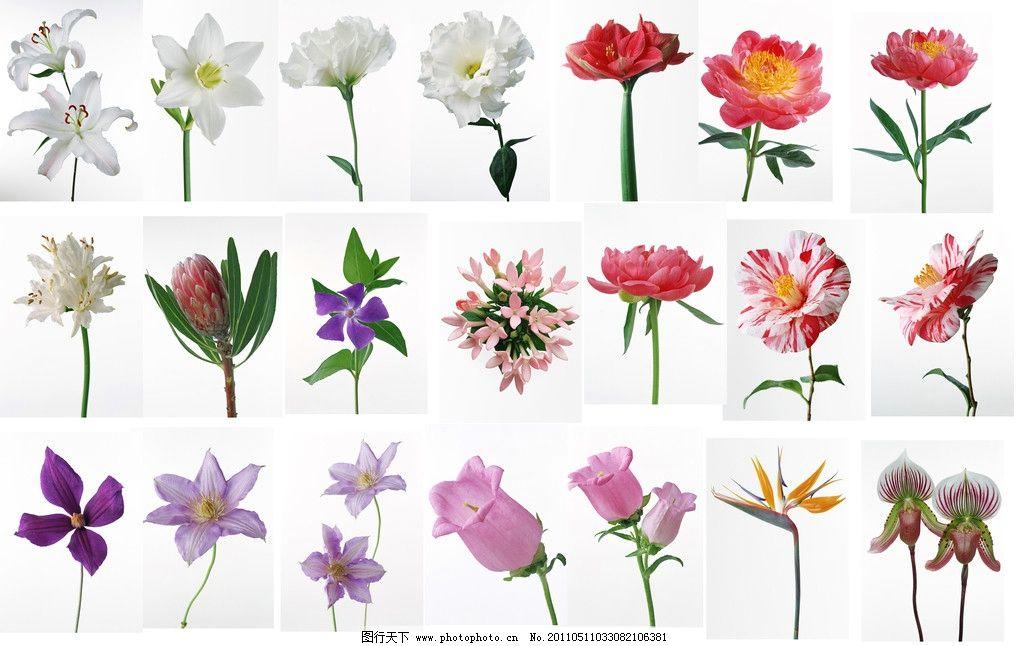 百花皆含笑 谱子