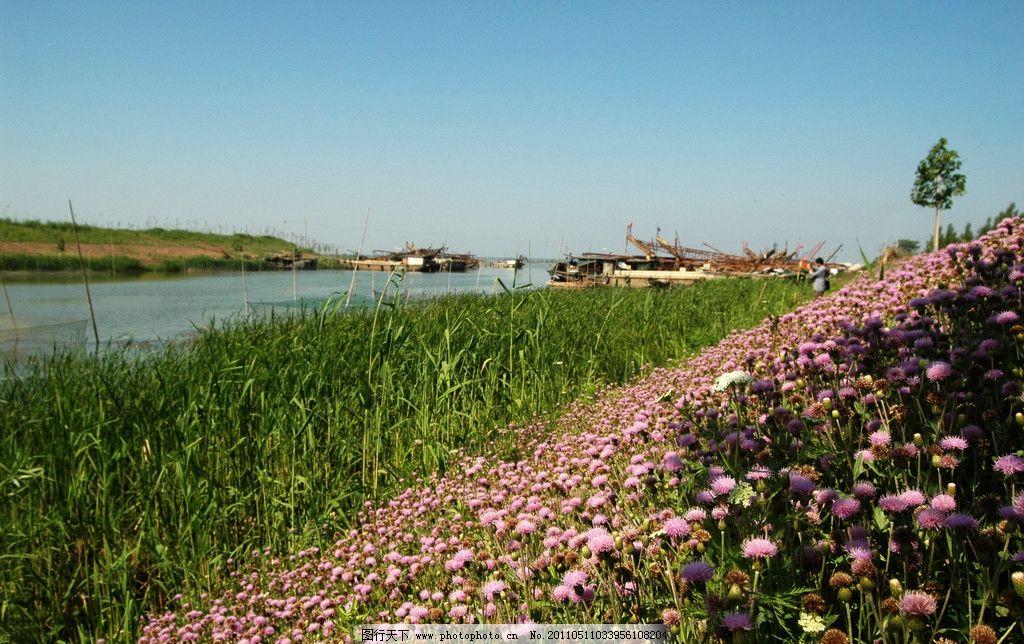 夏日的野花 微山湖畔 岸边 水草青青 繁花似锦 国内旅游 旅游摄影