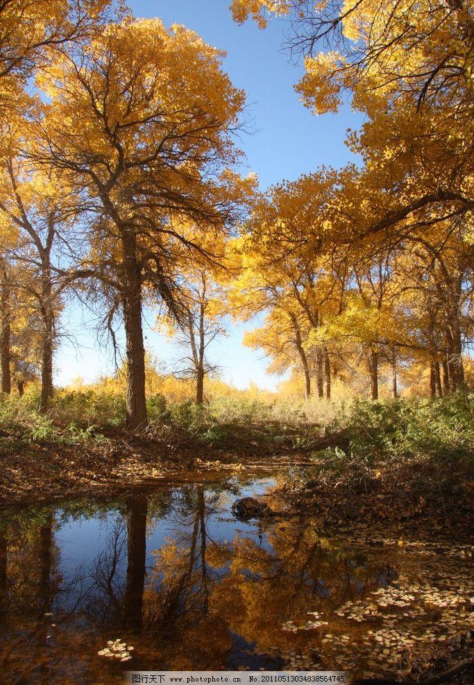 胡杨林 内蒙古 风景名胜 自然景观 摄影 72dpi jpg图片