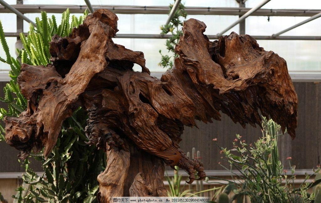 木雕艺术 鹰爪