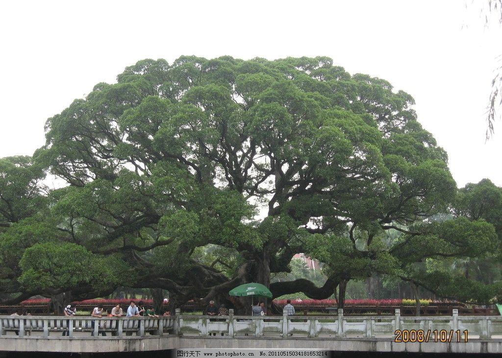 榕树图片_自然风景_旅游摄影