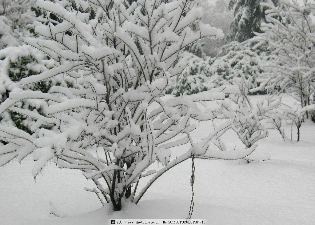 雪景 树枝 雪地 自然风景 自然景观 摄影 180dpi jpg