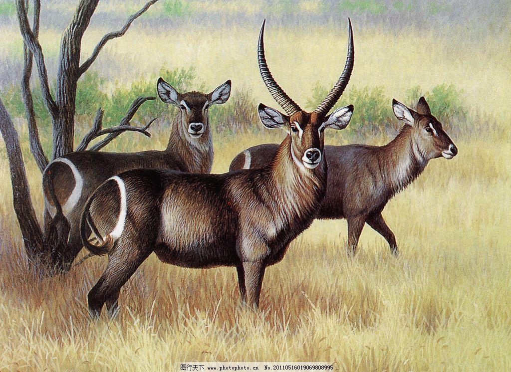 草原上的羚羊 丙烯画 羊 羚羊 草 草原 树 动物 绘画书法 文化艺术