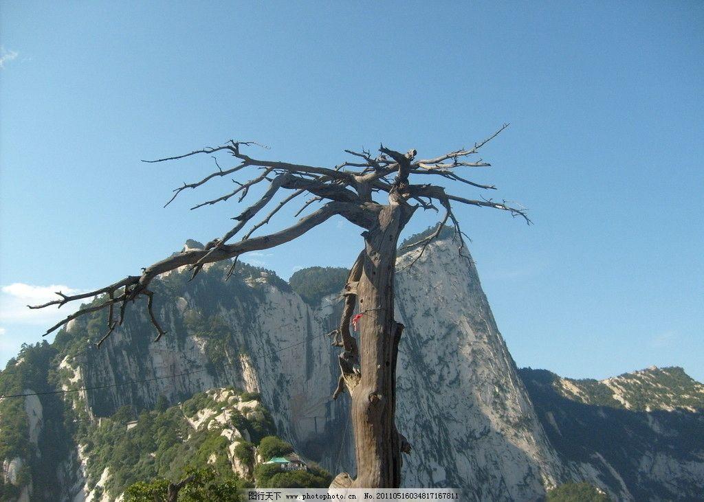 华山枯树 华山 枯树 荒凉 原创 高清壁纸 摄影 自然风景 自然景观 96