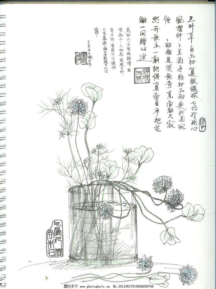 野花 钢笔 淡彩 花卉 写生 绘画 绘画书法 文化艺术 设计 200dpi jpg