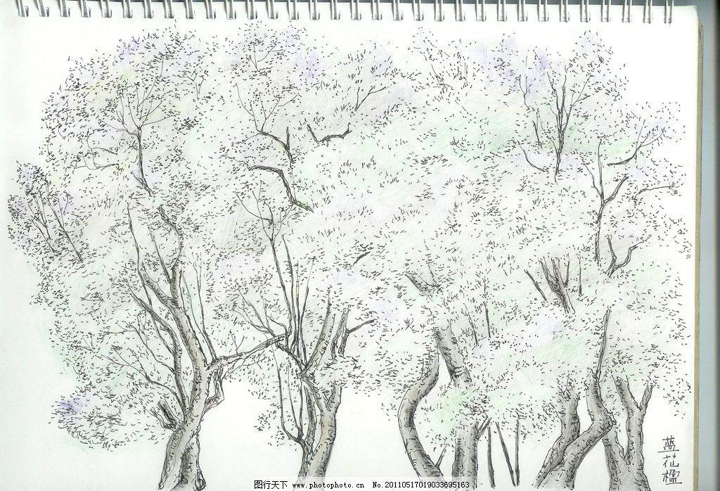 蓝花楹 钢笔 淡彩 花卉 写生 绘画 绘画书法 文化艺术 设计 300dpi