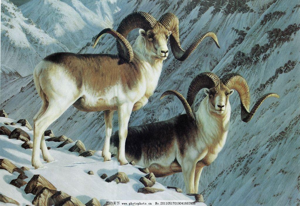 雪山大角羊 丙烯画 羊 大角羊 动物 雪山 绘画书法 文化艺术 设计 400