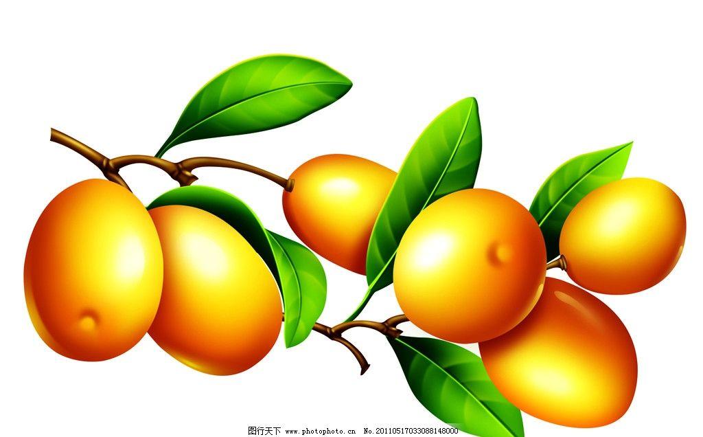 枇杷psd 果中之王 水果 其他设计 喷绘 源文件