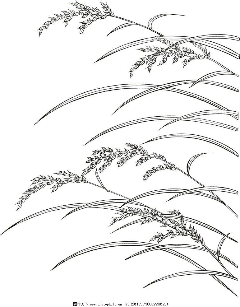 水稻线稿图片