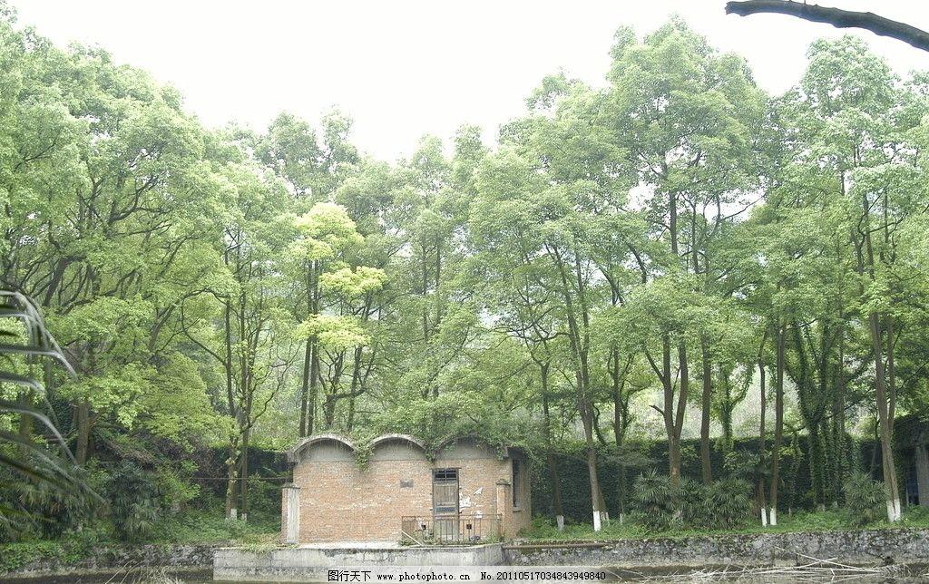 森林 树 树叶 叶子 树枝 树干 红叶 水面 倒影 自然风景 自然景观