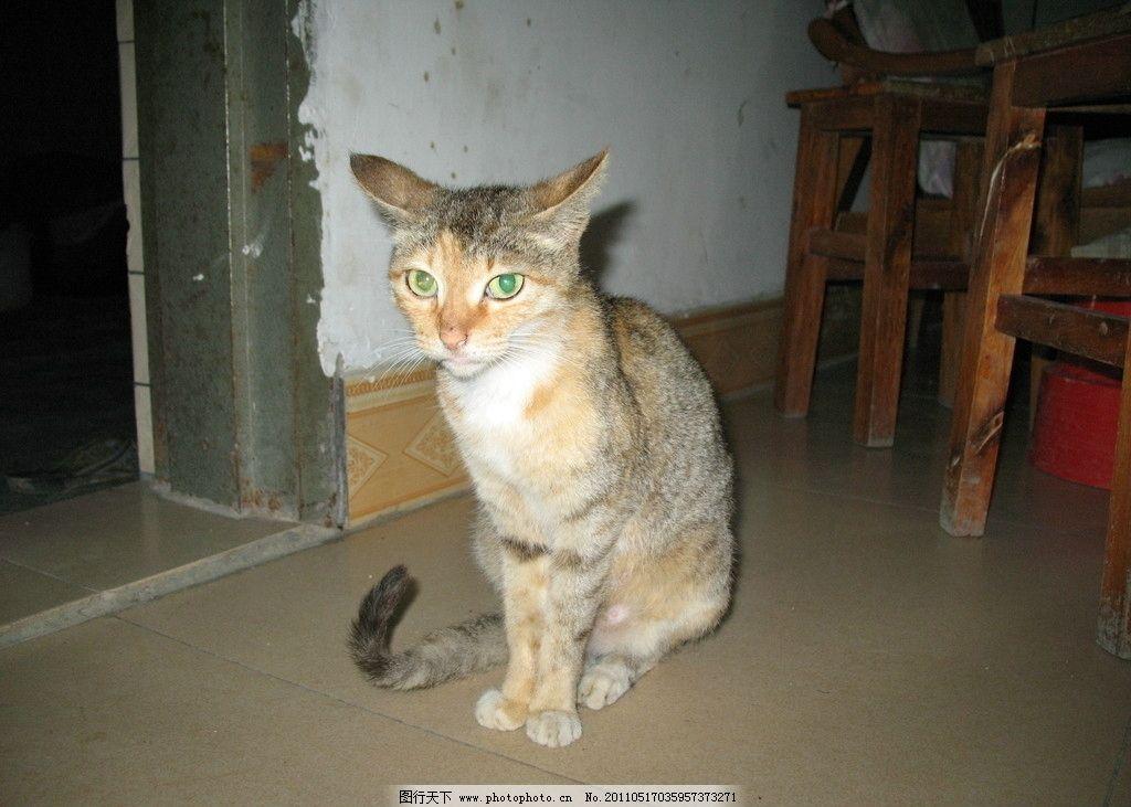 可爱猫 小猫 温驯小猫 家禽 小动物 宠物 家禽家畜 生物世界 摄影 180