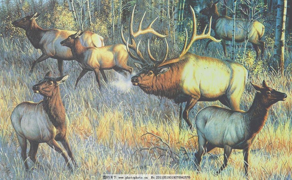 草原上麋鹿群 丙烯画 鹿 驼鹿 动物 草 草原 树 森林 绘画书法 文化
