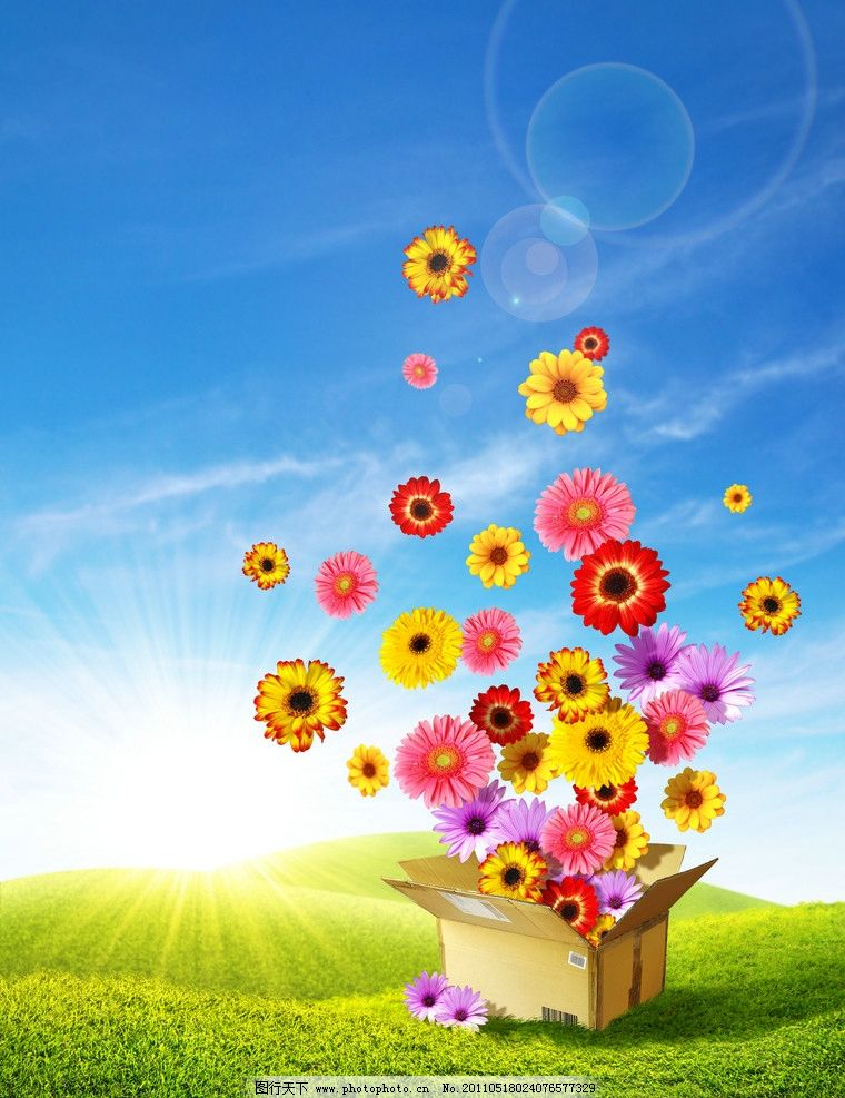 蓝天白云绿野鲜花礼盒 菊花 阳光 绿草 草地 飞出 动感 风景