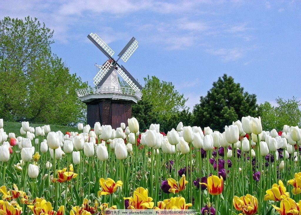 荷兰风车 蓝天 郁金香 绿地 田园风光 自然景观 摄影 72dpi jpg