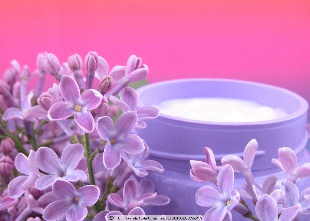 牛奶丁香花图片