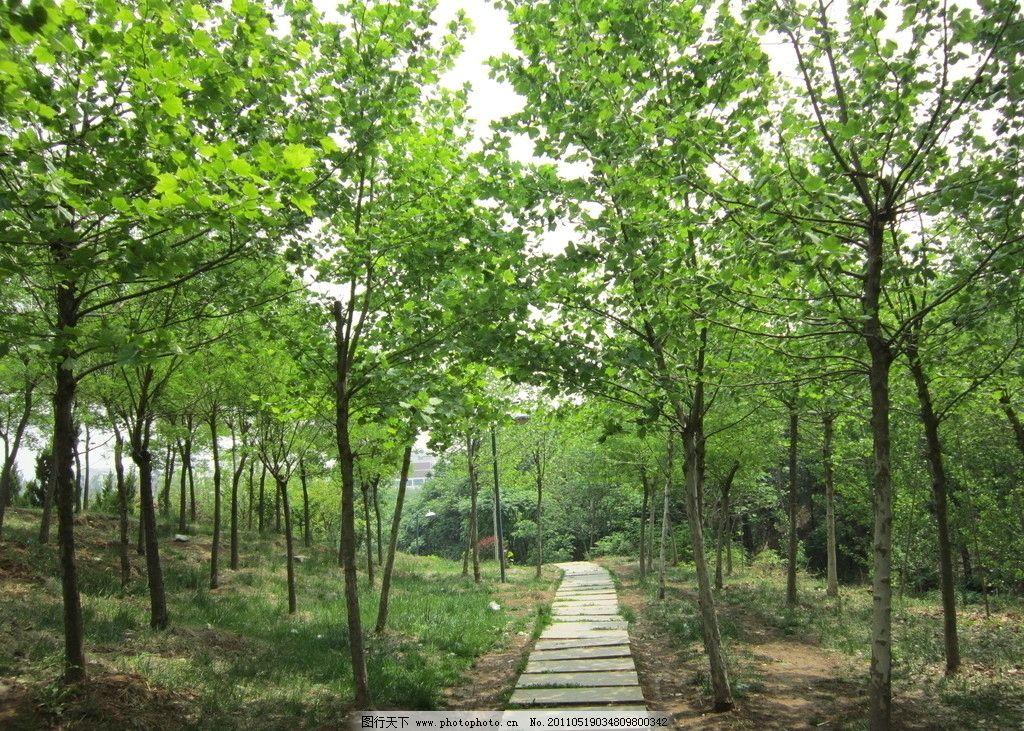 林间小路 树林 小路 通向远方的小道 自然风景 自然景观 摄影 180dpi