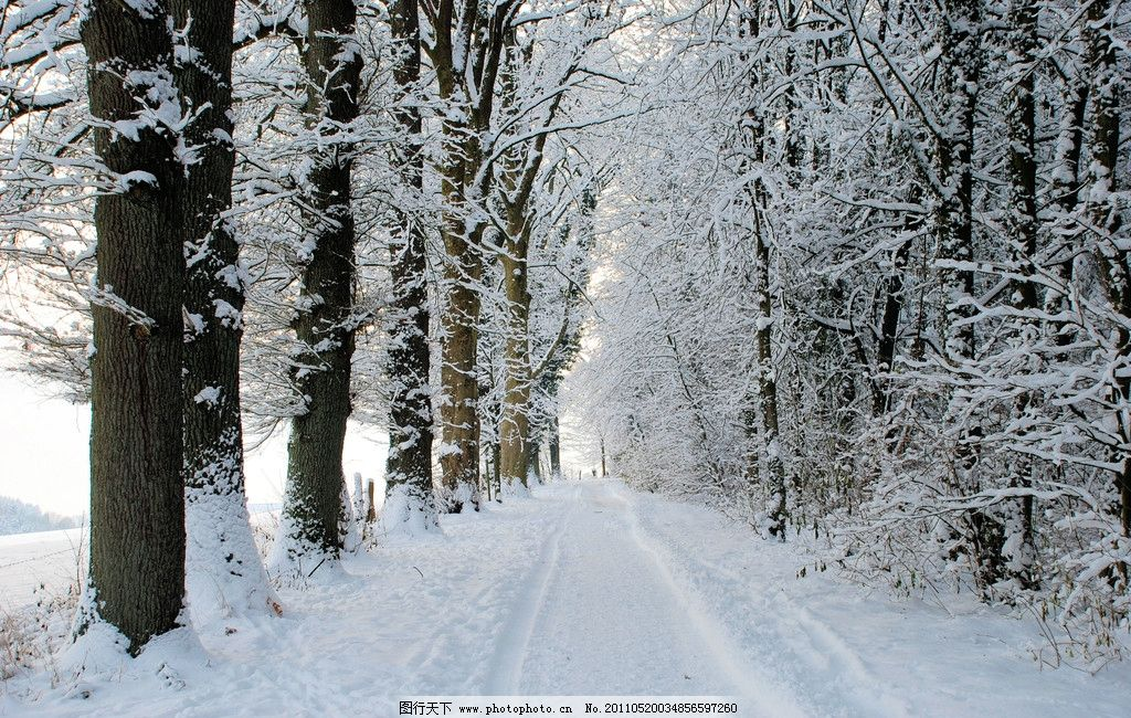 马路 雪树 松树 冬季风光 冬季美景 自然风光 自然景色 自然景色高清