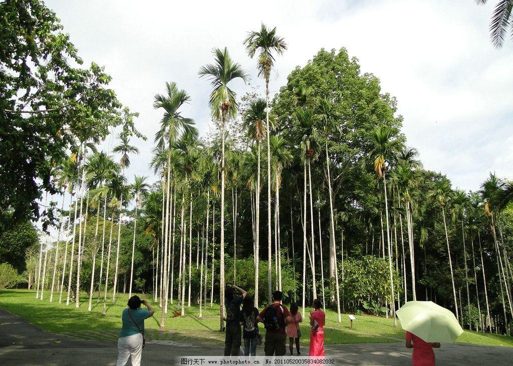 西双版纳风景 西双版纳 热带雨林 森林 树木 自然风光 人物 树木树叶
