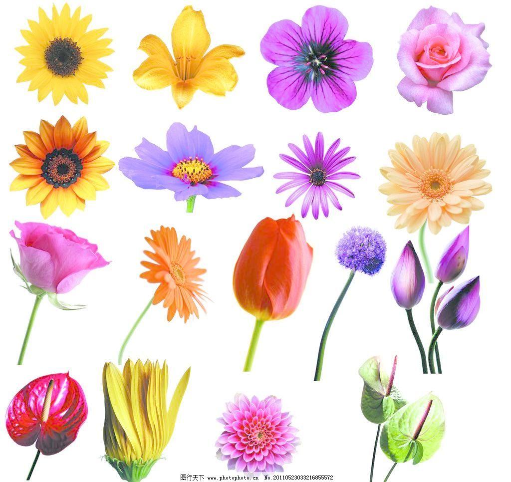 300dpi psd psd分层素材 百合 分层素材 花 花瓣 花朵 莲 玫瑰 花朵