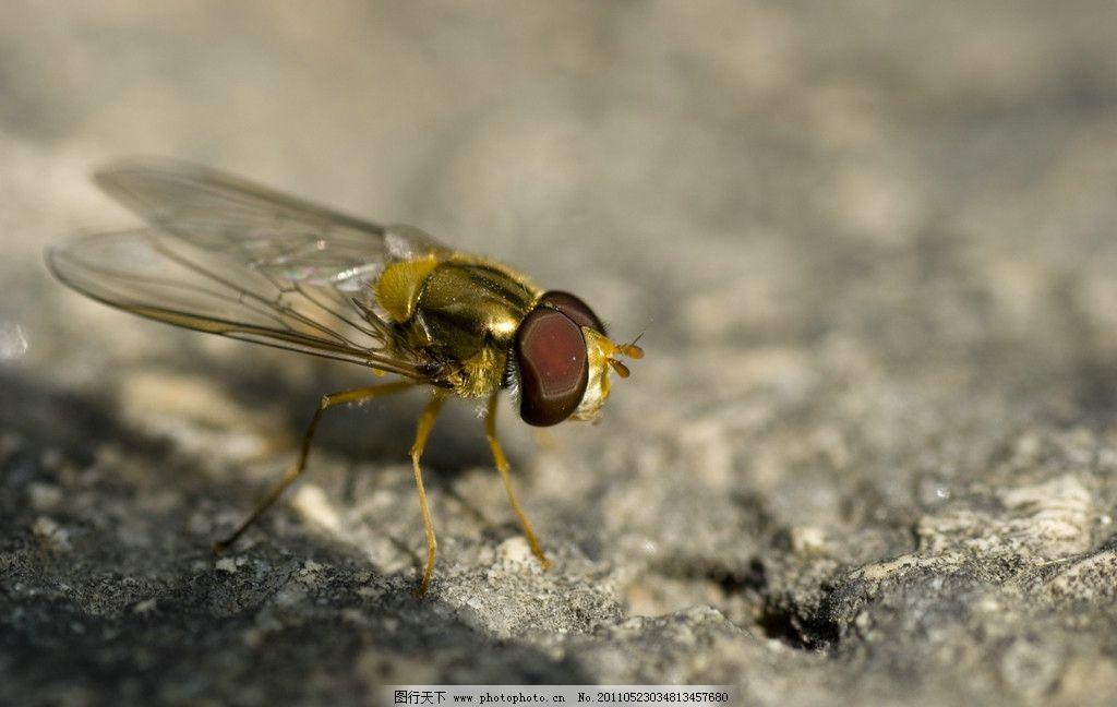 昆虫 动物 飞虫 翅膀 透明 自然景观 自然风景 摄影