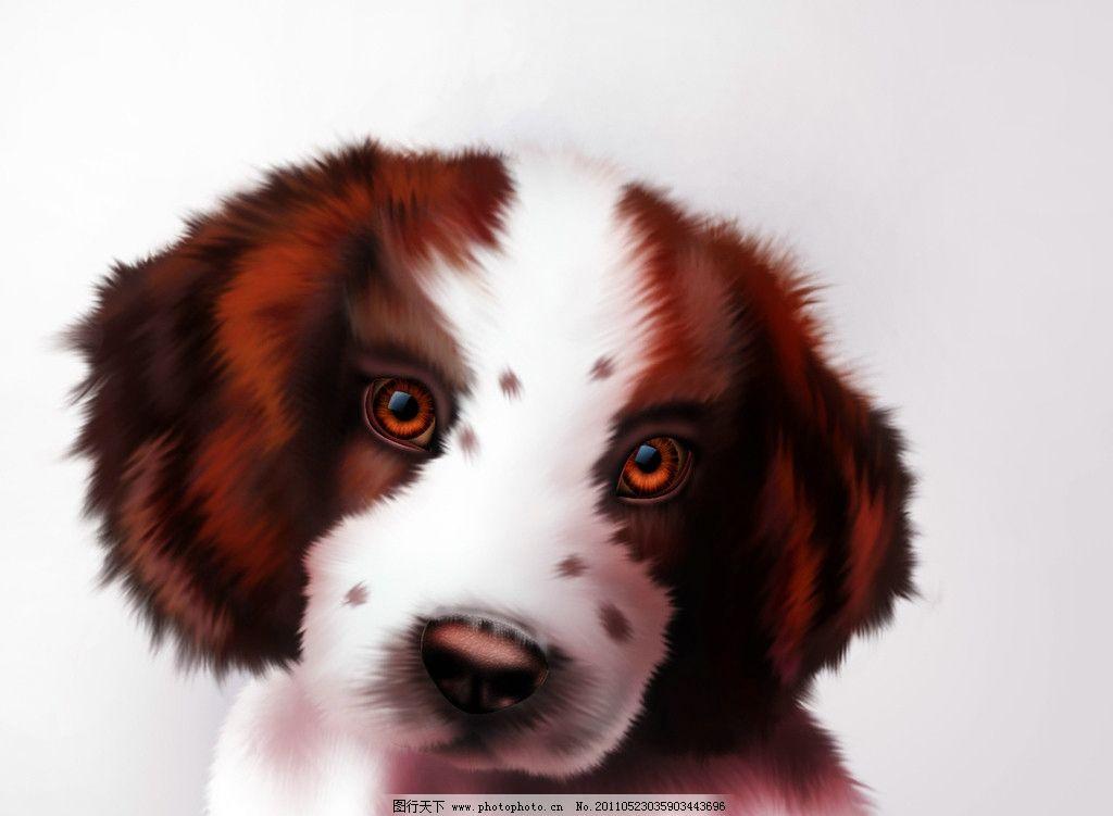 可爱狗狗请欣赏图片