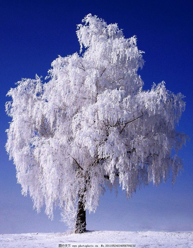 冬天风光 雪树 冬天的树 蓝天 天空 摄影素材 景色素材 自然风景 自然