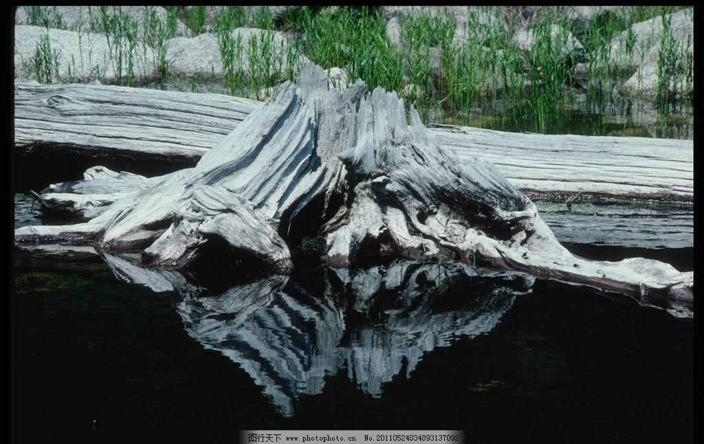 树桩 倒影 水 枯萎的木头