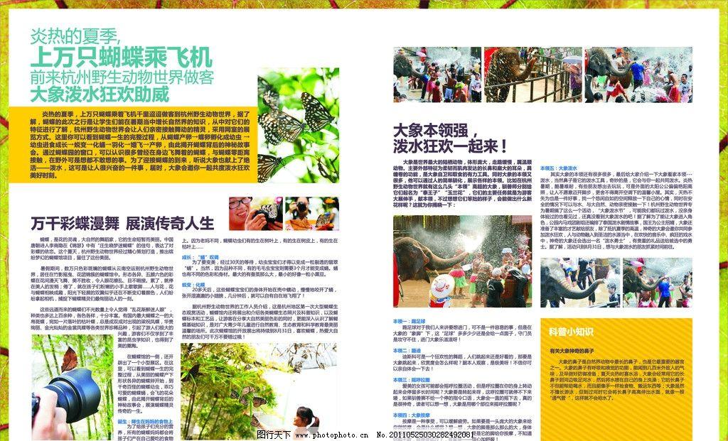 野生动物宣传杂志 杂志 蝴蝶 大象 喷水 植物 图文排版 dm宣传单 广告
