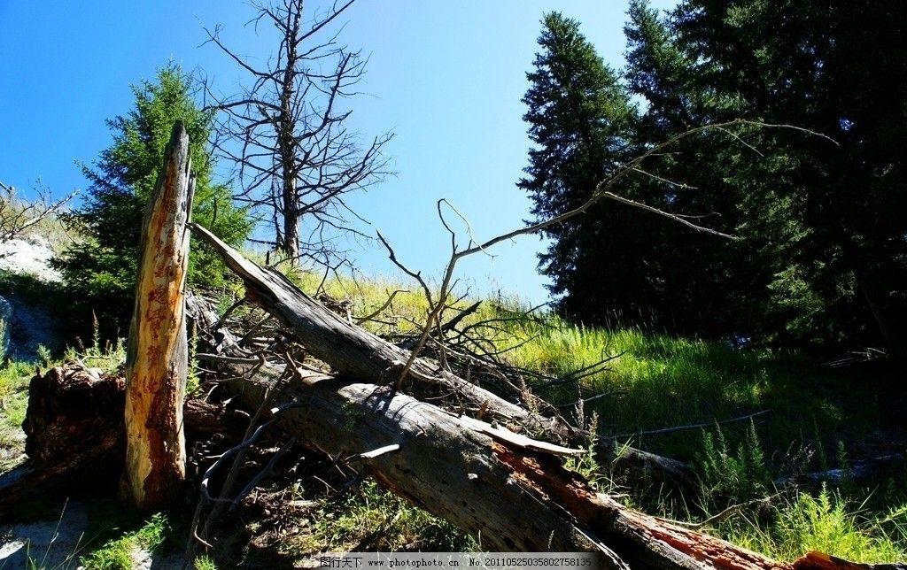 枯木 蓝天 绿树 枯树 枝干 树木树叶 生物世界 摄影 350dpi jpg