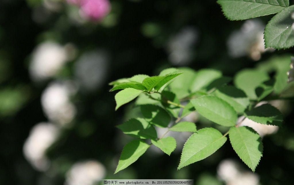 背景素材 绿色叶 绿色盎然 自然光 72dpi jpg 精美桌面壁纸 树木树叶
