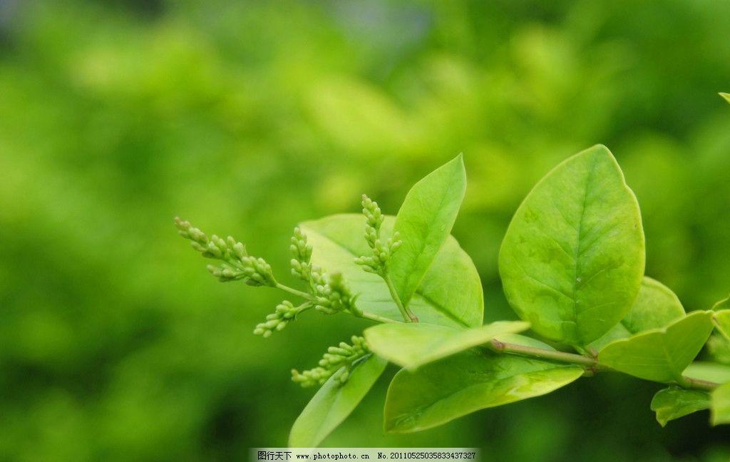 绿叶桌面 绿色 电脑桌面 壁纸 背景素材 绿色叶 美丽 生机勃勃 自然风