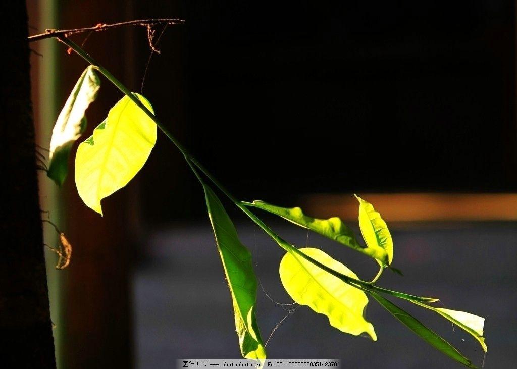 枝叶 树杆 光影 树木树叶 生物世界 摄影 72dpi jpg