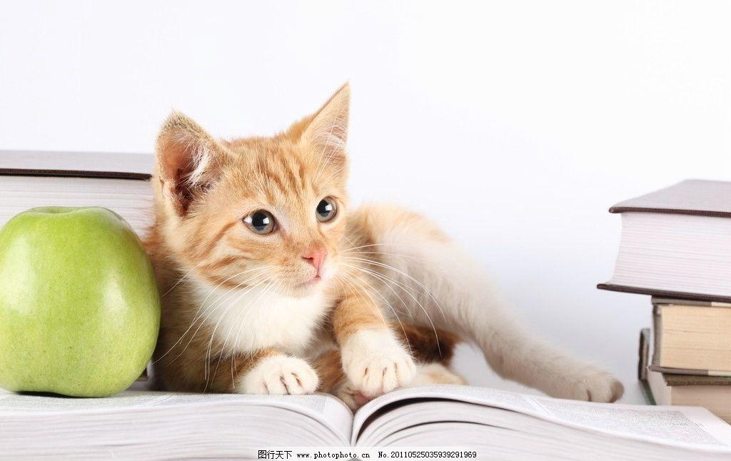 猫猫 超清苹果电脑桌面壁纸