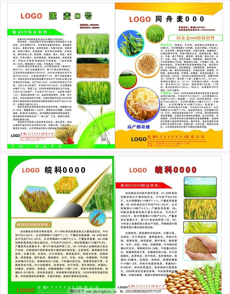 种子特性宣传单页 小麦 花生 大豆 麦田 卷页 小麦种子特性 绿色麦穗