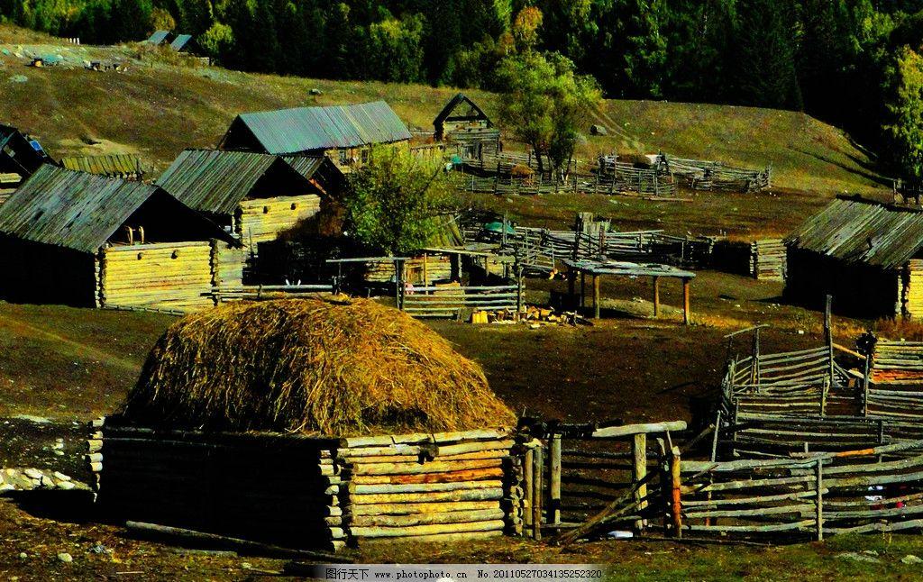新疆风景图片,阿勒泰 北疆 齐巴罗依村 村庄 树木-图